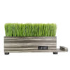 Grass Planter7