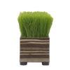 Grass Planter8